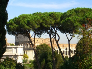 trees-in-front-of-colosseum
